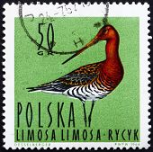 Postage stamp Poland 1964 Black-tailed Godwit, Shorebird