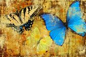foto of blue butterfly  - Butterflies in blue and yellow tones on a background with grunge patterns - JPG