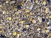 various seeds (corn, wheat, sunflower, barley)