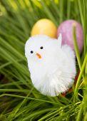 O ovo ou a galinha
