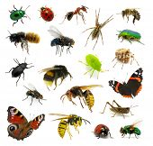 stock photo of hornets  - Set of insects on white - JPG