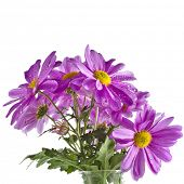 beautiful bouquet of chrysanthemum flower daisy  isolated on white background