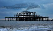 West Pier Starlings