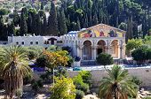 foto of gethsemane  - Church All Nation in garden of Gethsemane beside foots of Mount Olives Jerusalem