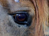 stock photo of tear ducts  - Close up view of a Horse - JPG