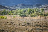 An image of the great Flinders Ranges in south Australia