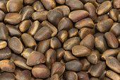Cedar Nuts Background