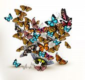 Beautiful Vector Heart From A Lot Of Realistic Colorful Butterflies