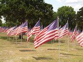 Freedom Field