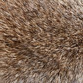 abstract wolf  fur background