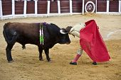 Bullfighter Manuel Benitez El Cordobes put your head between the horns of a bull in act of courage i
