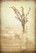 Old postcard with willow branch in vase of glass