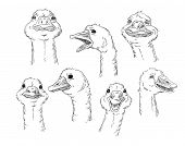 A cute goose with different facial expressions of a human. Vector illustration.