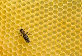 stock photo of beehives  - Close up view of the working bees on honeycells - JPG