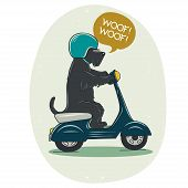 stock photo of scottie dog  - Funny illustration of a cute Scottish terrier riding old school blue scooter - JPG