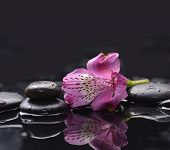 New beautiful orchid and pebbles background
