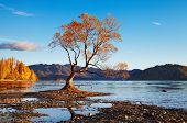 Autumn landscape, lake Wanaka, New Zealand