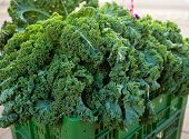 Kale At Farmers Market