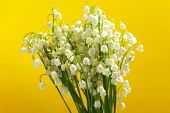 Beautiful lilies of the valley on yellow background