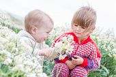 Happy Toddler Boy Gives Wild Flowers Little Girl