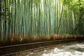 Arashiyama Mountain Kyoto Japan Famous Landmark For Tourist With Bamboo Forest