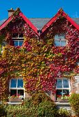 red and green ivy covered house