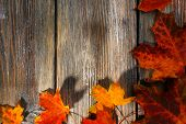 Autumn leaves on brown wooden background