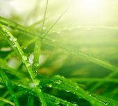 soft focus green grass background