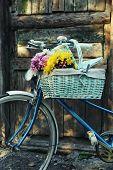 Old bicycle with flowers in metal basket on old brown door background
