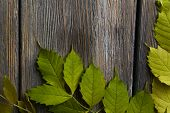 Green leaves on brown wooden background