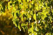 Beautiful tree leaves