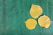Yellow leaves on green wooden background