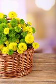 Beautiful bouquet of chrysanthemums flowers in wicker basket, on light background