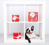 French bulldog with Santa hat and presents on sofa in room