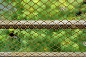 Wire Mesh Close-up