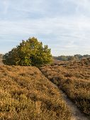 Path Through Heathland In Fall