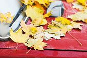 Fallen Yellow Maple Leaves On Red Car Hood