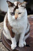 Cute Striped Street Cat