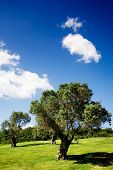 Beautiful summer landscape with trees and blue sky