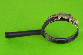 picture of hemidactylus  - One Small Gecko Lizard and Loupe on a Colored Background - JPG