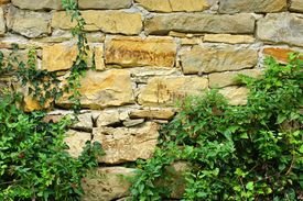 image of old stone fence  - Old Stone Wall With Plants - JPG