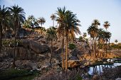 stock photo of guru  - Palm trees with rock formations at Guru Shikhar - JPG