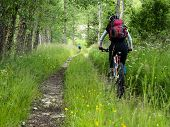 image of dirt-bike  - Woman riding mountain bike on a dirt road in the forest - JPG