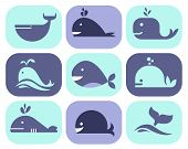 picture of googly-eyes  - Collection of vector whale icons and illustrations - JPG