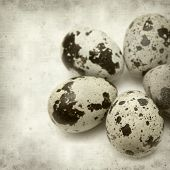 stock photo of quail  - textured old paper background with speckled quail eggs - JPG