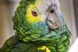 image of green-winged macaw  - Green bird plumage Harlequin Macaw feathers nature texture background - JPG