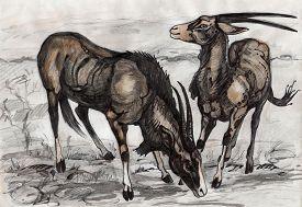 stock photo of eland  - graphic animal illustration eland antelopes in savanna - JPG