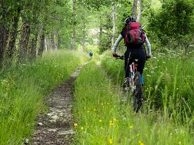 picture of dirt road  - Woman riding mountain bike on a dirt road in the forest - JPG