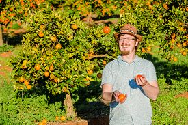 stock photo of juggling  - Cheerful young man juggling oranges on citrus farm on sunny summer day - JPG
