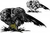 Styled and original vector illustration of an eagle. Very clean vectors